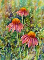 Coneflower Trio