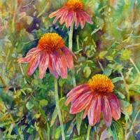 """Coneflower Trio"" by HaileyWatermedia"