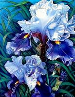 Light Blue Irises