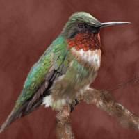 HUMMINGBIRD_s Art Prints & Posters by SUSAN LIPSCHUTZ