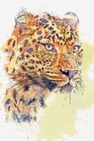 Cheetah -  watercolor by Ahmet Asar