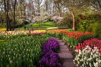Touch of Purple and Red. Keukenhof Botanic Garden