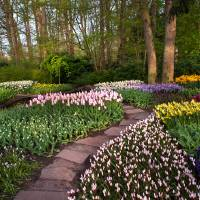 Pathway through Keukenhof Flowerbeds 1 Art Prints & Posters by Jenny Rainbow