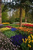 Surrounded by Abundant Beauty. Keukenhof