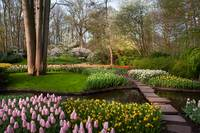 Walking Through Spring Beauty in Keukenhof
