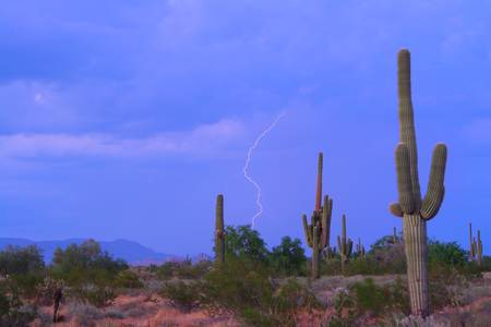 Southwest Sonoran Desert Lightning Strike