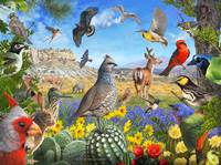 birds of arid texas