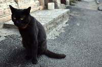 Black Cat on street