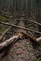 deadfall, avalanche gorge