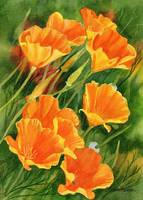 California Poppies Faces Up