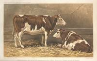 Cotentin heifers 1862