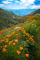 Endless Beauty in Walker Canyon DSC_0351Lt copy