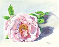 Original gouache painting rose flower