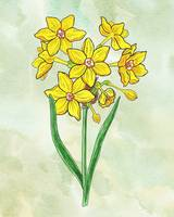 Botanical Watercolor of French Daffodil Flower