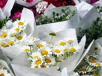 Bouquets of Daisies