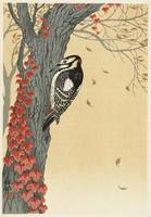 Great Spotted Woodpecker by Ohara Koson