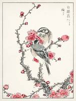 Pine Bunting and Plum Tree by Numata Kashu