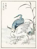 Heron and Egret by Numata Kashu