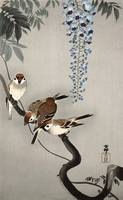 Ring Sparrows and Wisteria by Ohara Koson