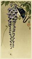 Flycatcher and Wisteria by Ohara Koson