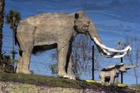 Mastodon Reflection on Tar Pit