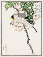 Masked Hawfinch and Silk Tree by Numata Kashu