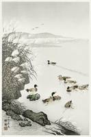Ducks on the Water by Ohara Koson