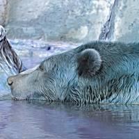 Winter Bear by Through The Split Window