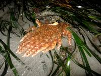 Seastar on the move 3