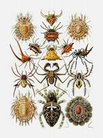 Arachnids Golden  Spiders