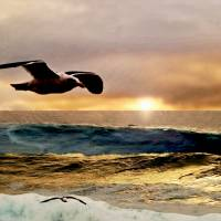 Gull in Golden Sky by Richard Thomas