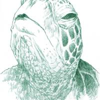 TurtleHead Art Prints & Posters by Mike Cressy