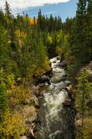 Rocky Mountain Autumn Stream Portrait