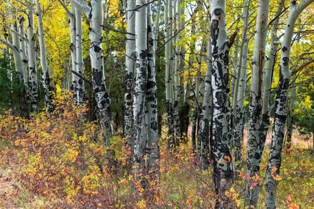 Elk Tree Markings
