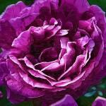 FloralStillLife gallery
