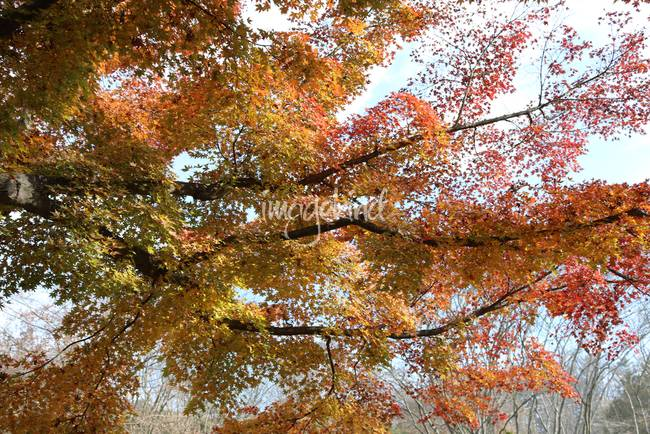 Autumn Waves of Color