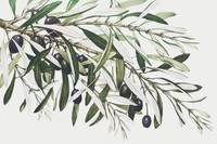 Olive Branches by Miriam and Ira D. Wallach