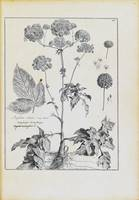Collection of plants drawn and engraved by order o