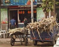 Carts with sugar cane