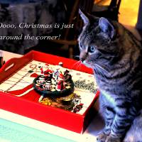 Christmas Cat by Richard Thomas