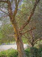 tree in Egypt