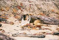 lassie in the sand