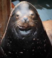 The Wise Sea Lion