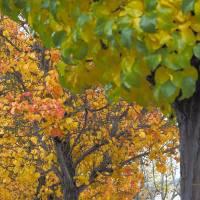 Autumn__C084887 by Richard Thomas