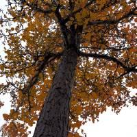 Autumn__C084889 by Richard Thomas