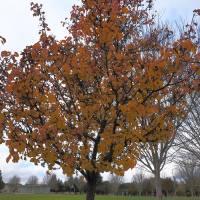 Autumn__C084897 by Richard Thomas