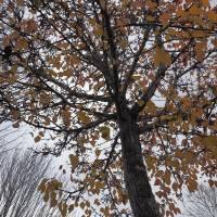 Autumn__C084891 by Richard Thomas