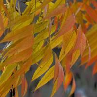 Autumn__C084905 by Richard Thomas