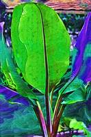 Abstract Banana Plant by Kirt Tisdale