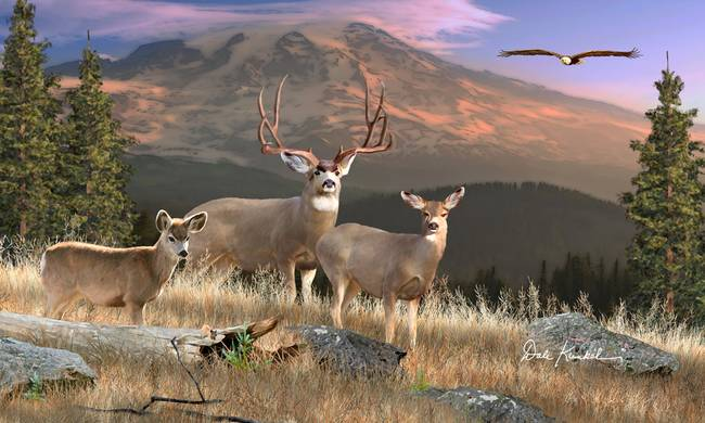 stunning  u0026quot mule deer u0026quot  artwork for sale on fine art prints
